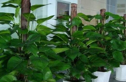 你还在相信植物可以除甲醛吗?