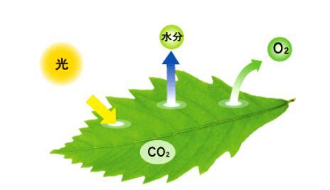 光触媒除甲醛后能直接入住么有入住标准吗?