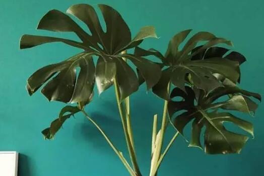 <b>除甲醛排名第一的植物究竟是哪一个?</b>